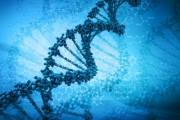 DNK tekshiruvi orqali tug'ilgan joyni aniqlash texnologiyasini ishlab chiqildi